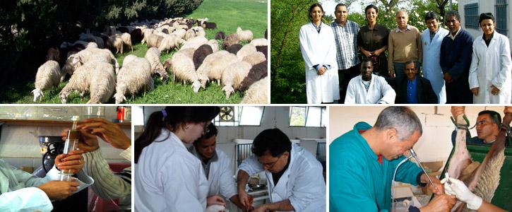 Laboratoire des Ressources Animales et Alimentaires