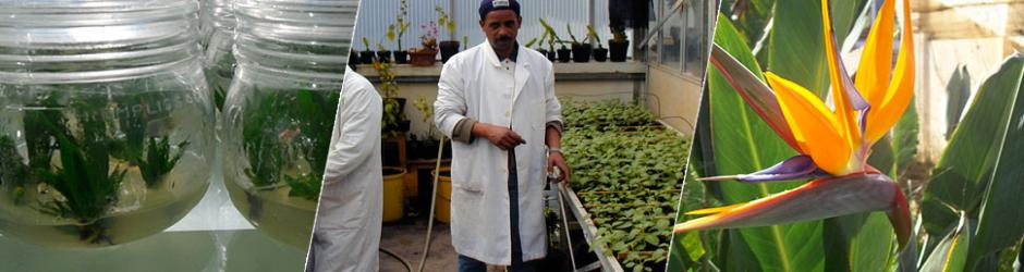 Département de Science de la Production Végétale et Biotechnologies Végétales